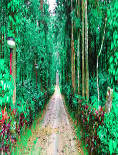 Coorg-Coorg