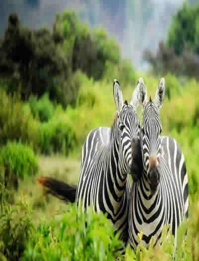 Kenya Safari Tour